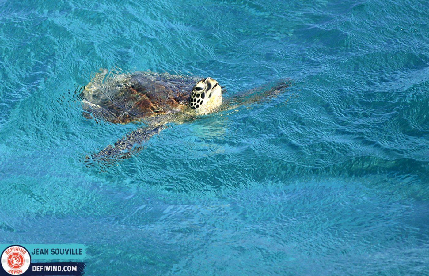 turtle-races-1-2-defijapan-miyako-souville (198)small